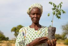 Grande Muralha Verde no Sahel - Revista Fórum Brasil de Gestão Ambiental